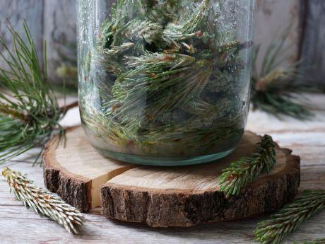 Przepisy: syrop z pędów sosny